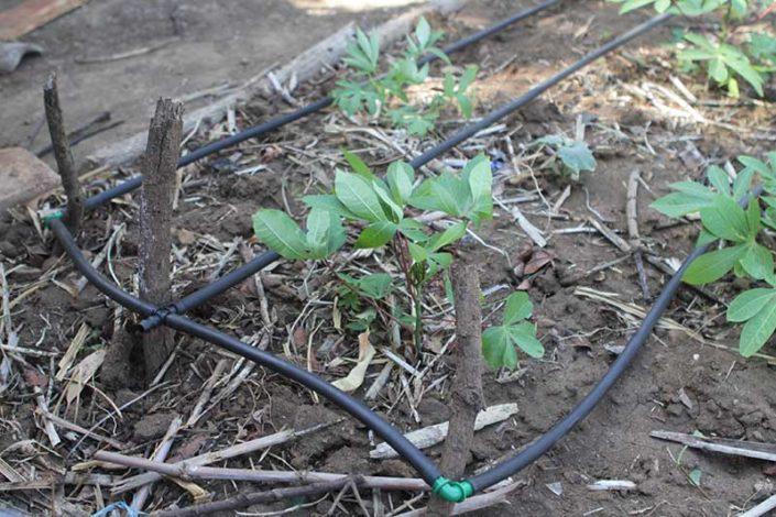 slow drip irrigation