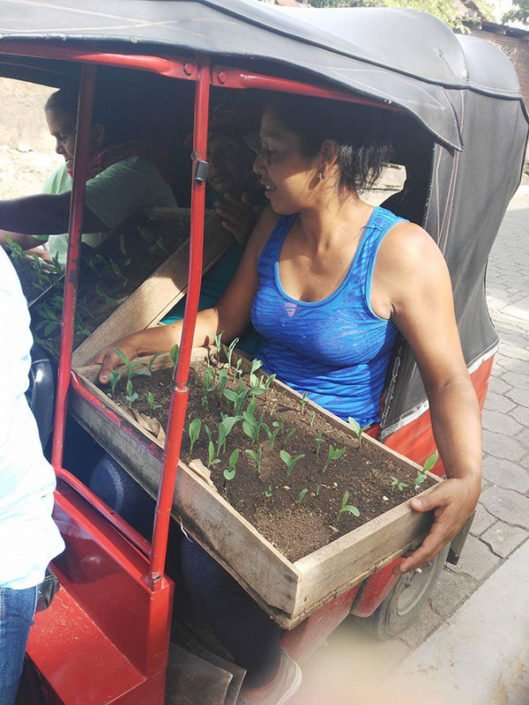 transporting seedlings to a school garden